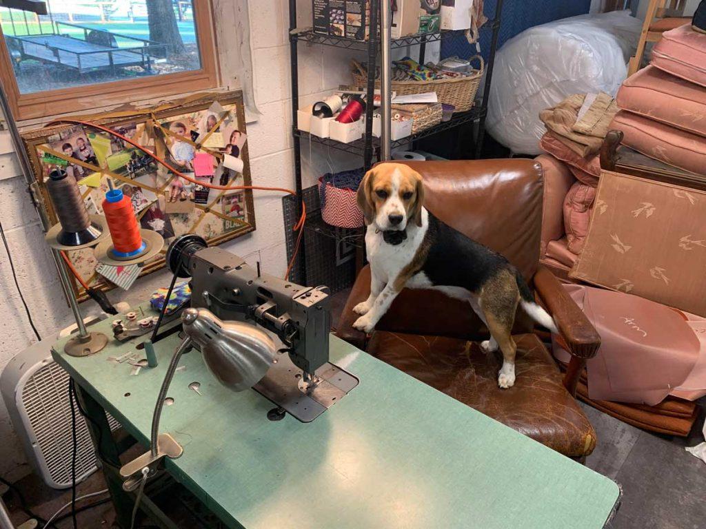Dog Shop Jersey